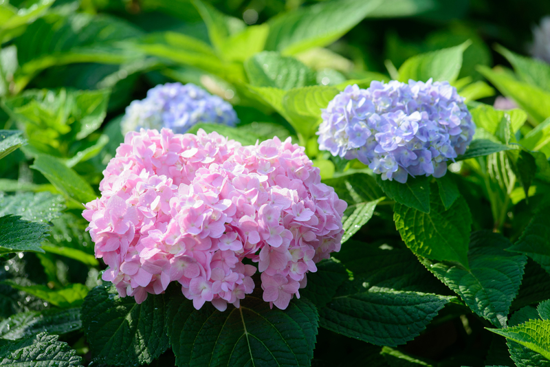 Cara Penanaman Tanaman Menggunakan Bibit Bunga